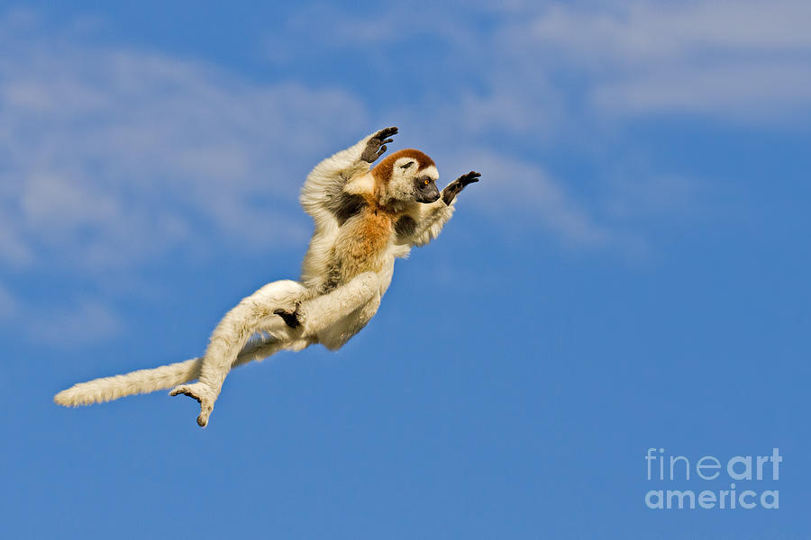 Africa Photograph - Who Needs Wings? by Ashley Vincent