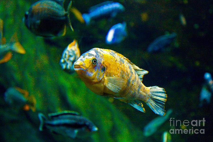 Fish Photograph - Who You Looking At by Bob McGill