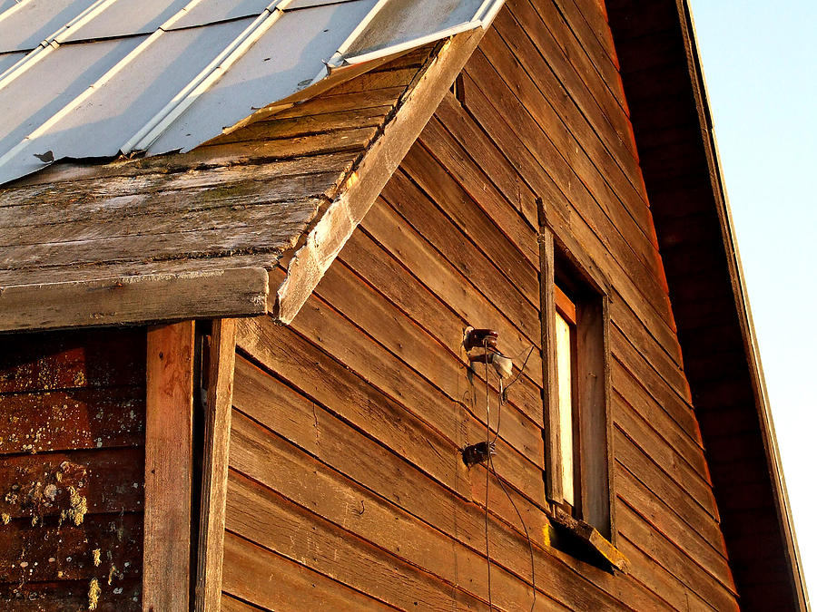 Old Barn Photograph - Whole Lotta Shakin by Everett Bowers