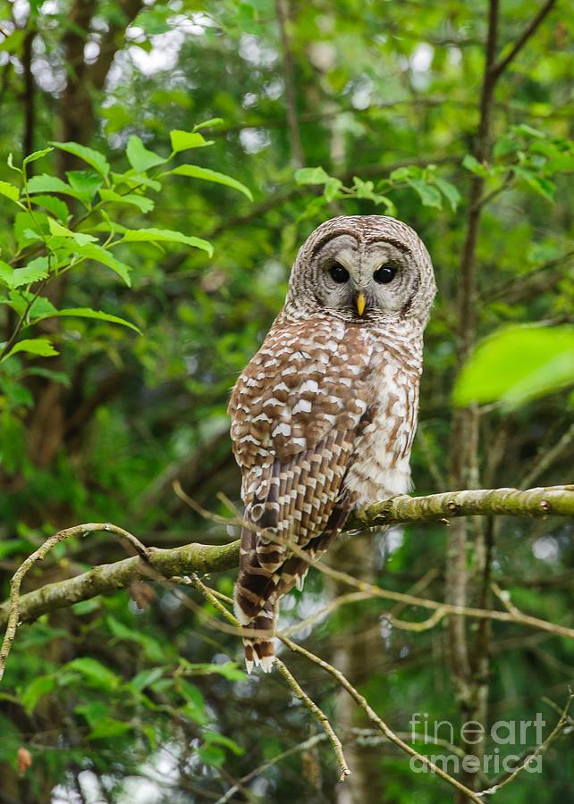 Wildlife Photograph - Whoooo Did We See by Rod Wiens