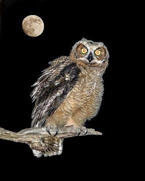 Owl Photograph - Whoooo Gives A Hoooot by Lesley Brindley