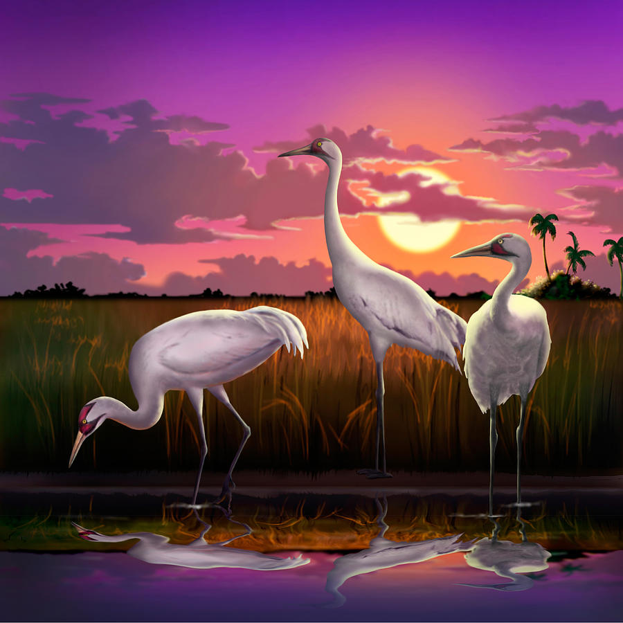 Whooping Cranes At Sunset Tropical Landscape Square