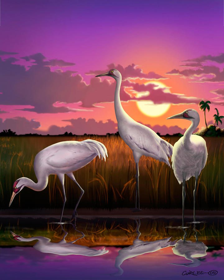 Whooping Crane Painting - Whooping Cranes Tropical Florida Everglades Sunset Birds Landscape Scene Purple Pink Print by Walt Curlee