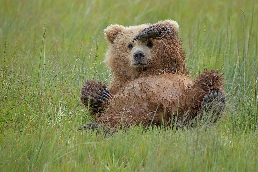 Bear Photograph - Whos There ? by Renee Doyle