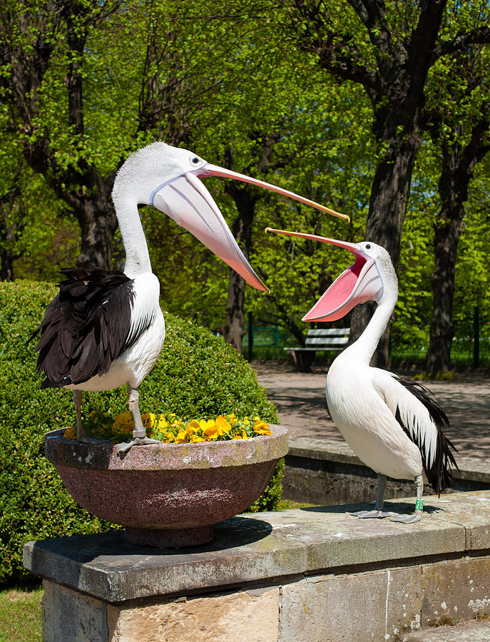 Birds Photograph - Why Are You Yelling On Me by Iryna Soltyska