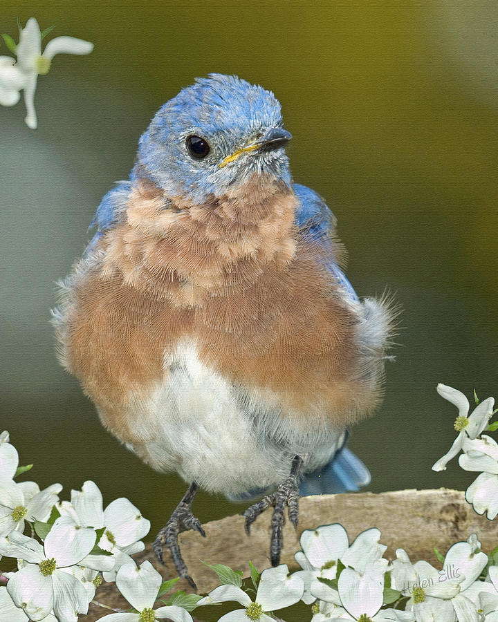 Birds Photograph - Why Be Mad by Helen Ellis
