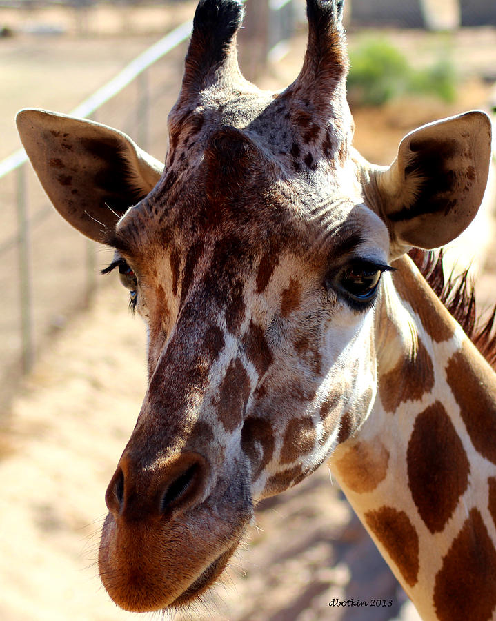 Zoo Photograph - Why Hello There by Dick Botkin