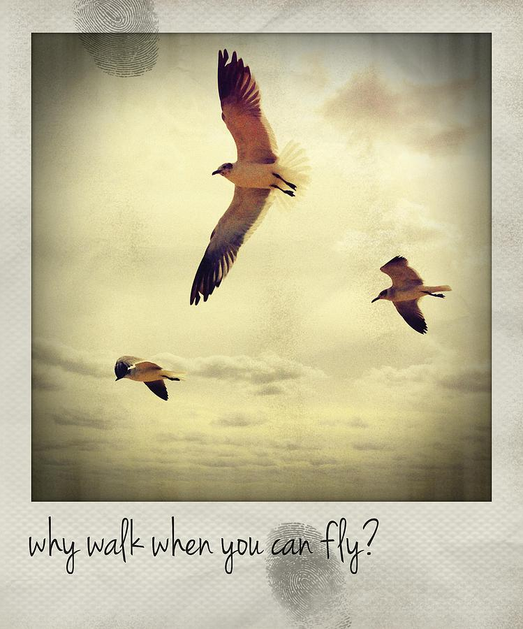 Why Walk When You Can Fly? Polaroid Photograph