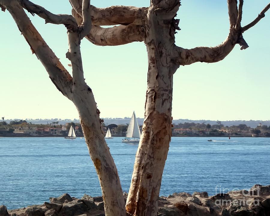 Wierd Tree In S D Photograph