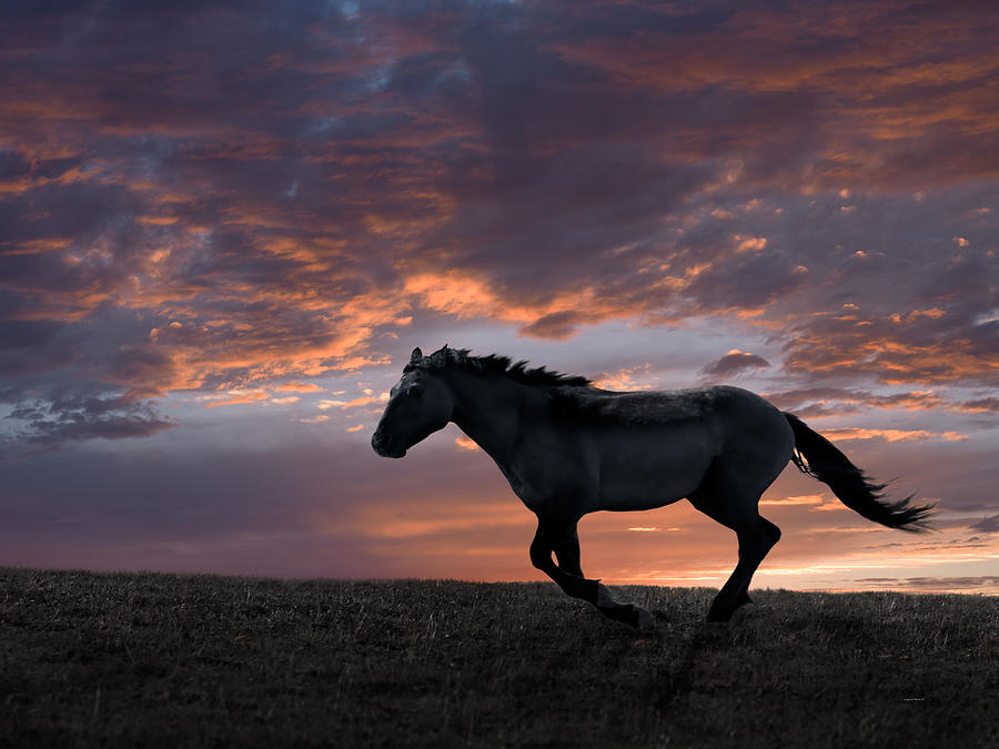 Animals Photograph - Wild And Free by Leland D Howard