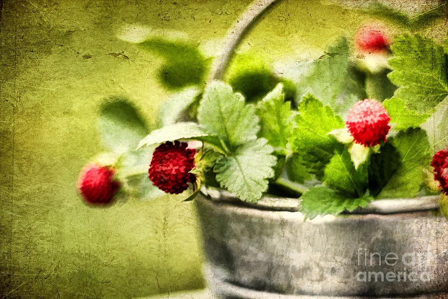 Still Life Photograph - Wild Berries by Darren Fisher
