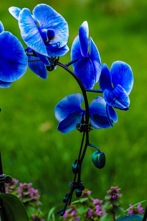 iphone 5 wallpaper blue flower