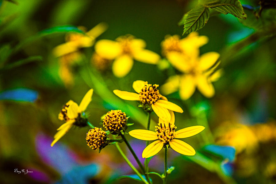 Wildflowers Photograph - Flowers - Wild Bouquet  by Barry Jones