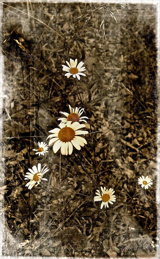 Wild Daisies Photograph