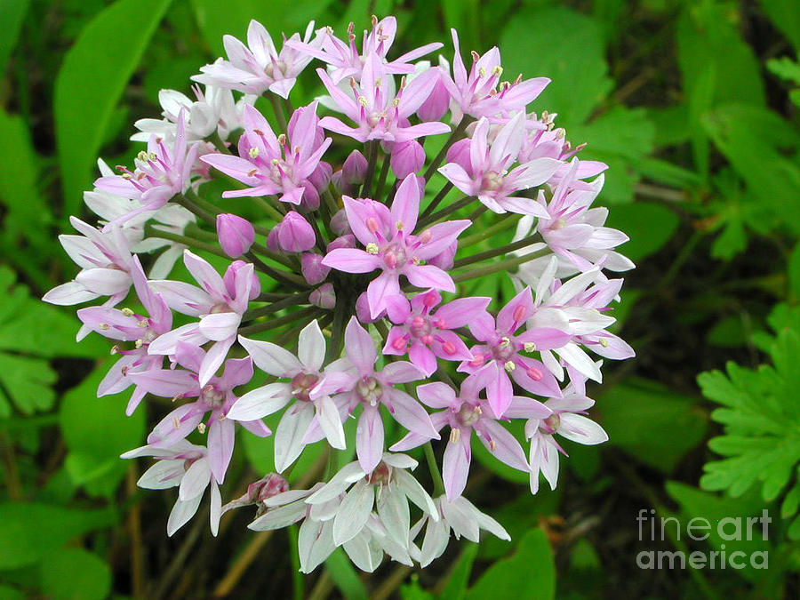 Wild Flower Photograph - Wild Flower2 by Michael Rushing