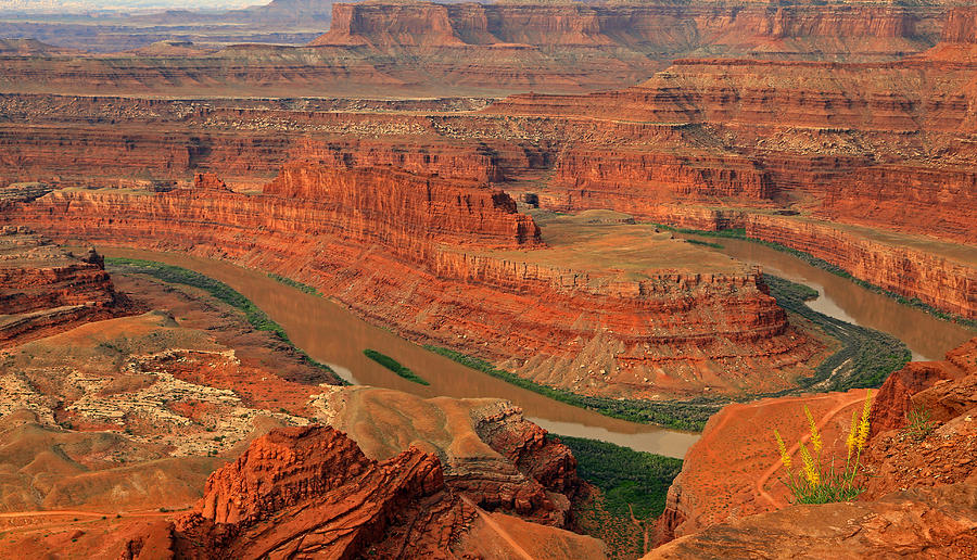 Wild Flowers At Dead Horse Point. Photograph