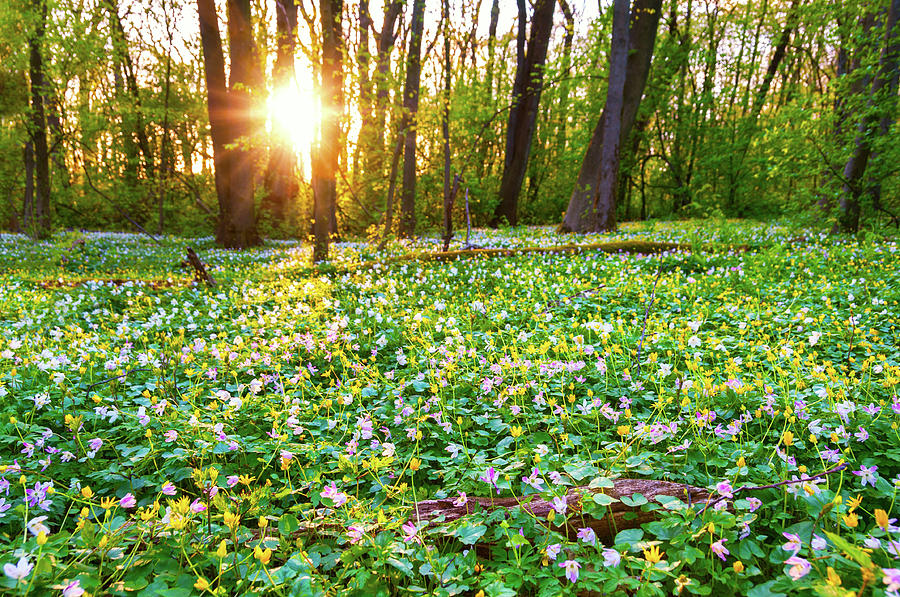 Wild Flowers In Evening Light Photograph by Martin Wahlborg