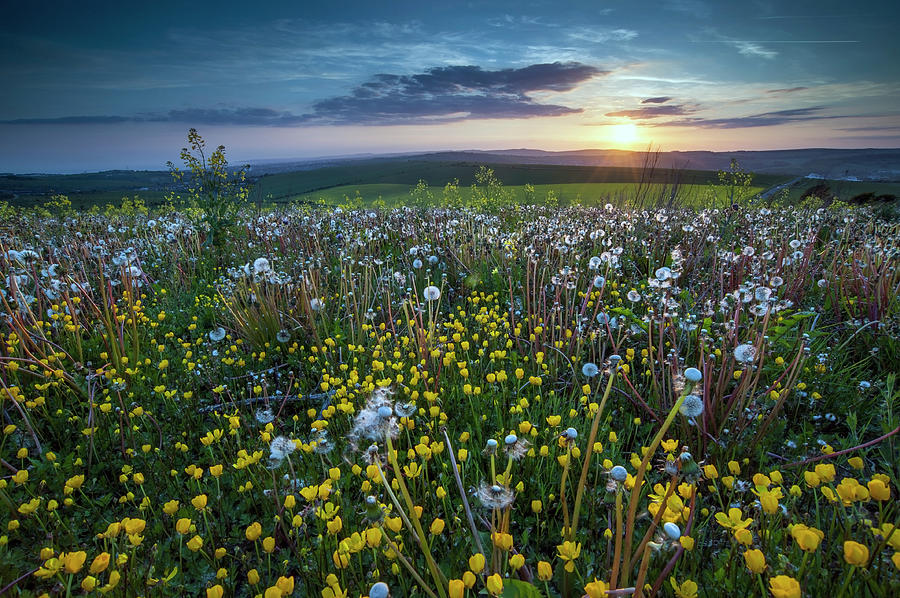 Wild Garden Photograph by Joaquim Pinho