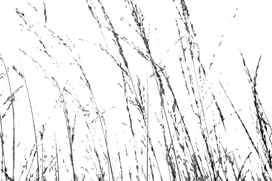 Dining Room Photograph - Wild Grasses Abstract by Natalie Kinnear