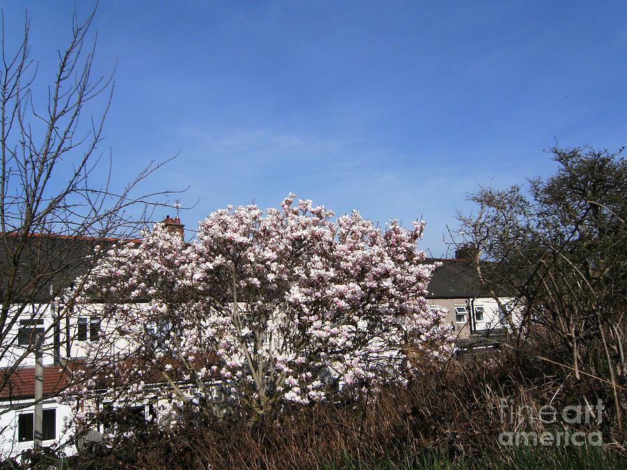 Plaistow Photograph - Wild Hedge And Cherry Blossom - The GREENWAY  Plaistow   by Mudiama Kammoh