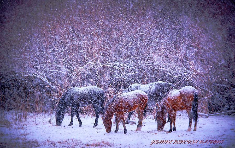 Snow Photograph - Wild Horse Christams by Jeanne  Bencich-Nations