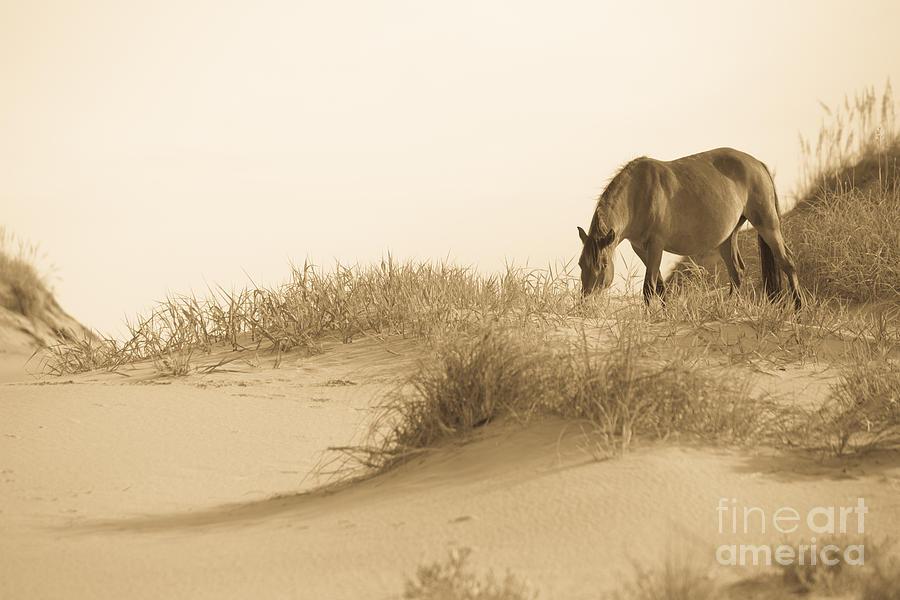 Horse Photograph - Wild Horse by Diane Diederich
