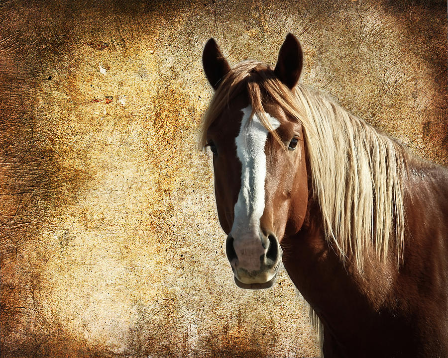 Wild Horses Photograph - Wild Horse Fade by Steve McKinzie