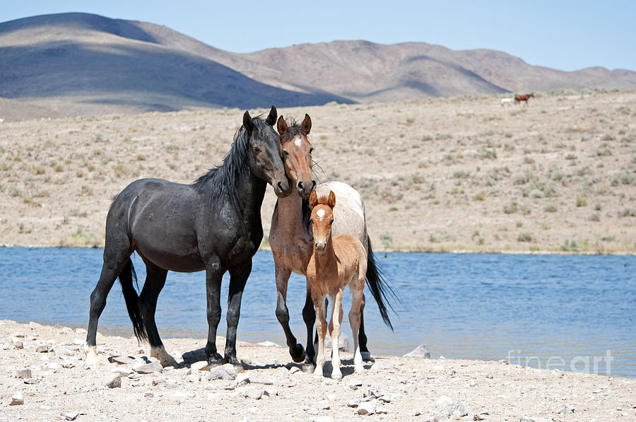 Wild Horse Family by Lula Adams