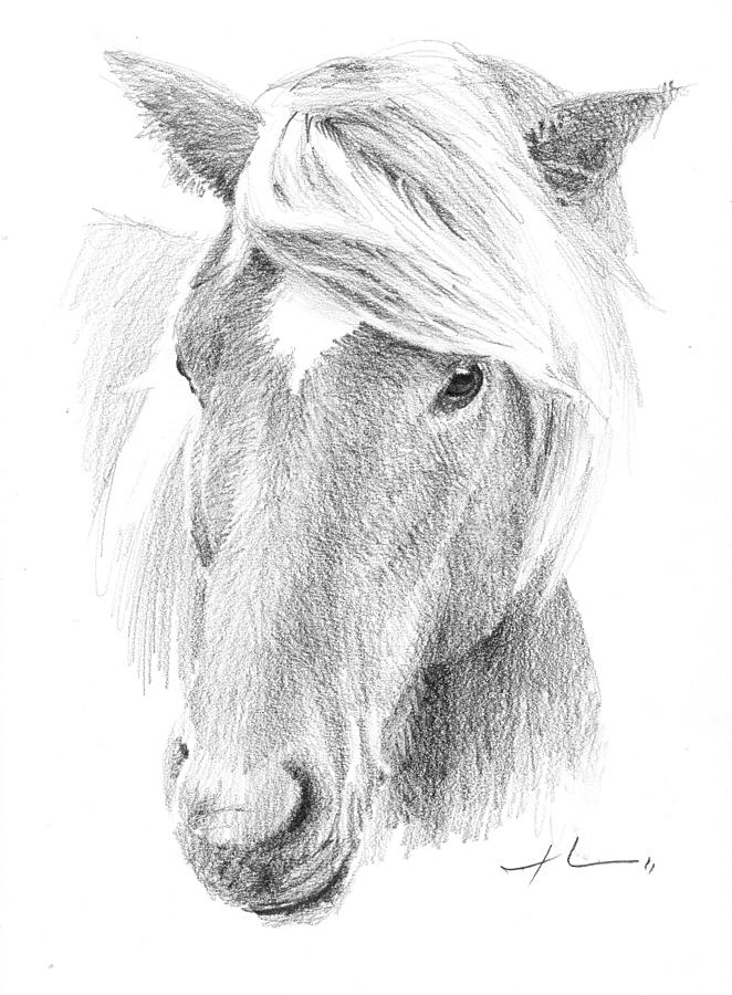 Wild Horse Pencil Portrait Painting by Mike Theuer
