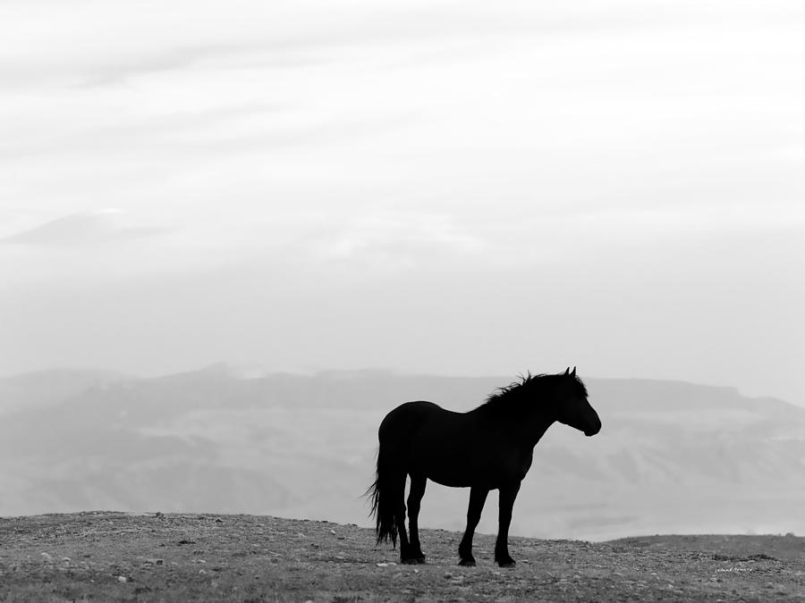 Animals Photograph - Wild Horse Silhouette Bw by Leland D Howard