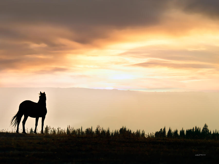 Animals Photograph - Wild Horse Sunset by Leland D Howard
