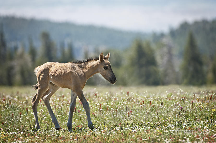 Wild Horses-animals-image-17 Photograph
