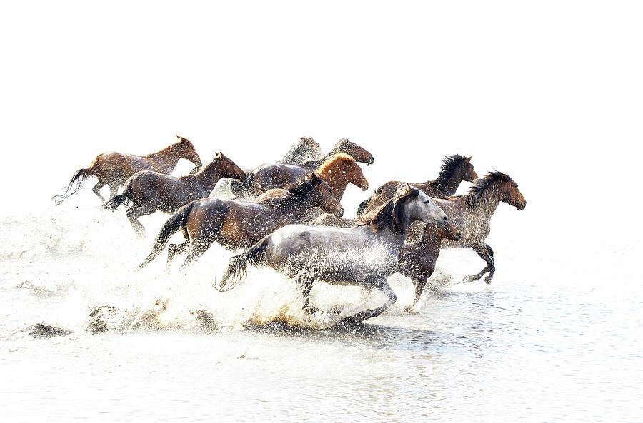 Wild Horses Of Anatolia Photograph by Fmajor