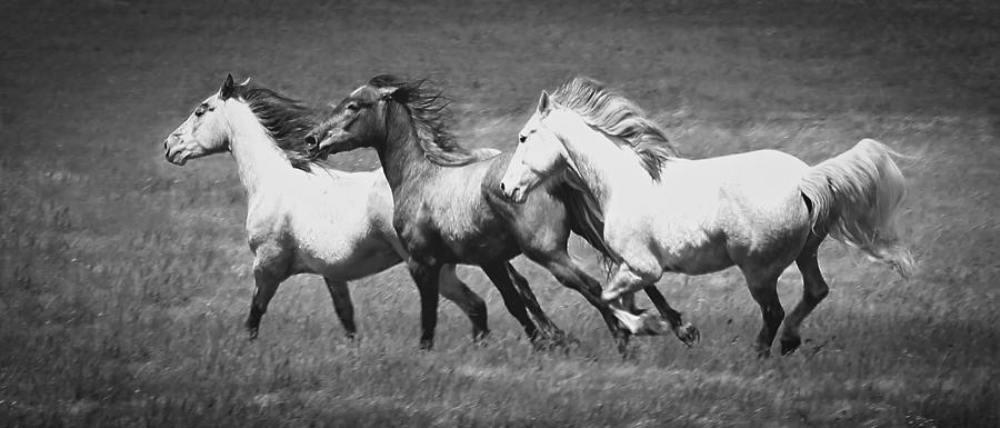 Wild Horses Running Photograph by Athena Mckinzie