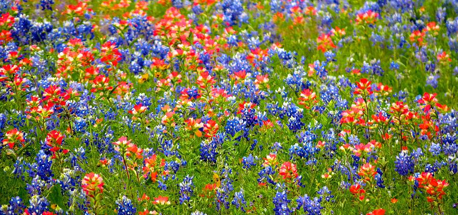 Bluebonnets Photograph - Wild In Texas by David  Norman