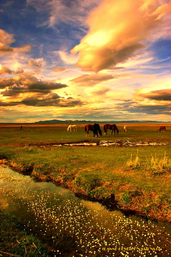 Landscape Photograph - Wild Lands Of Nevada  by Jeanne  Bencich-Nations