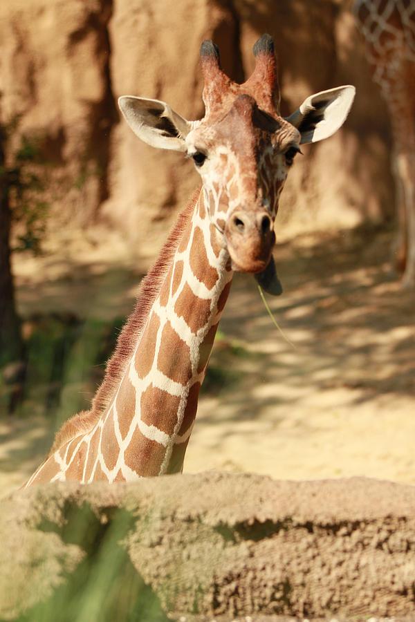 Nature Photograph - Wild Look by Tinjoe Mbugus