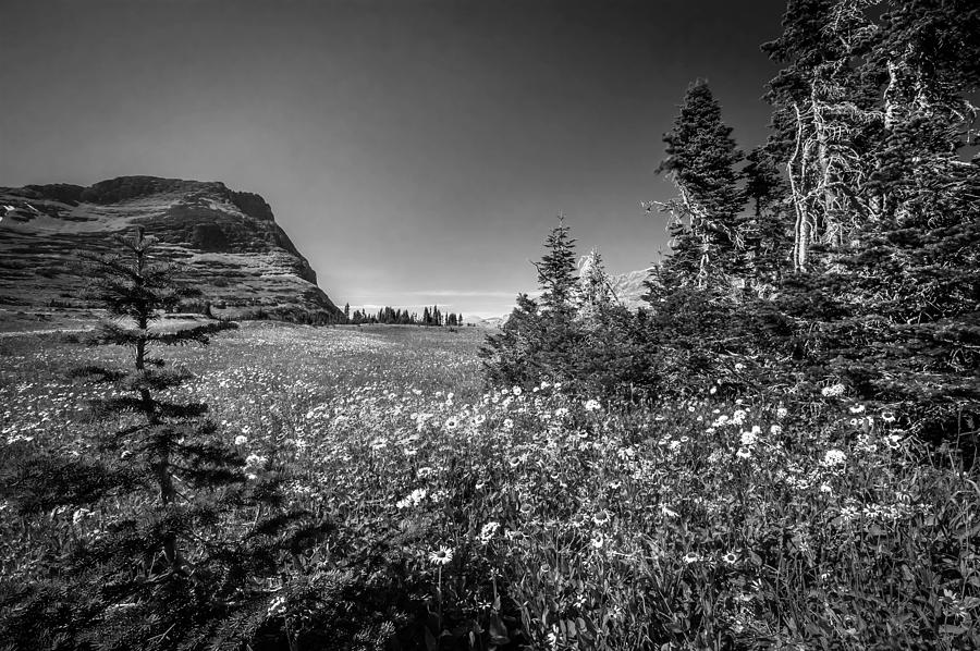 Glacier National Park Photograph - Wild Mountain Flowers Glacier National Park by Rich Franco