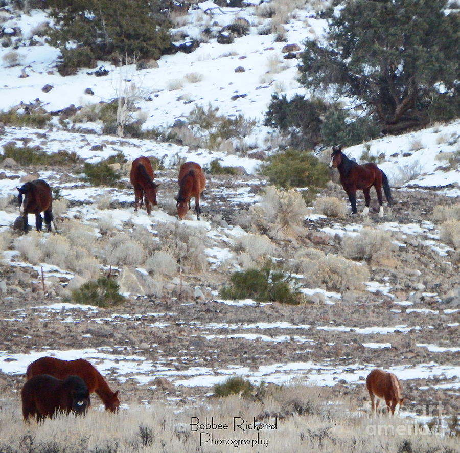 Acrylic Prints Photograph - Wild Mustangs In A Nevada Winter by Bobbee Rickard
