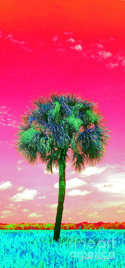 Wild Palm 2 by John Douglas