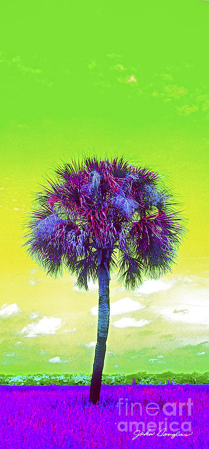 Wild Palm 3 by John Douglas