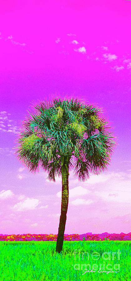 Wild Palm 4 by John Douglas