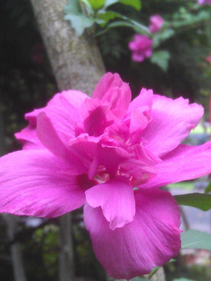 Flower Photograph - Wild Pink Rose by Kim Martin