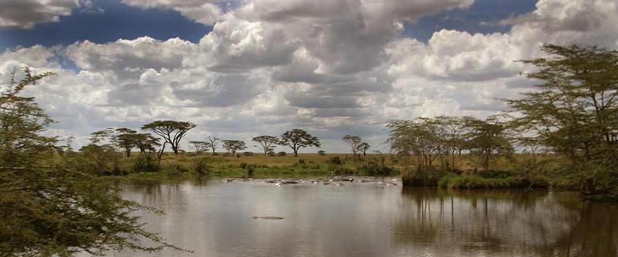 Hippo Photograph - Wild Pond by Joseph G Holland