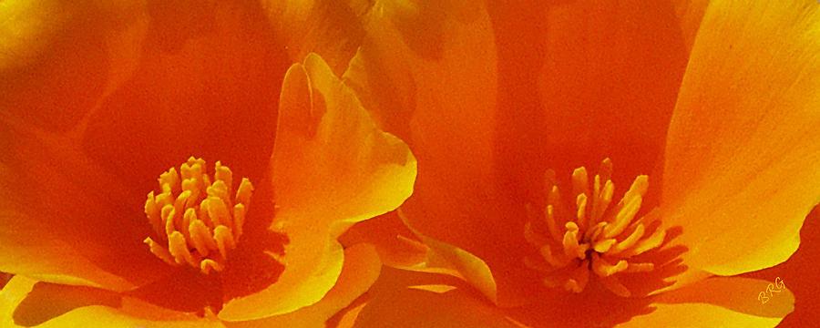 California Poppies Photograph - Wild Poppies by Ben and Raisa Gertsberg