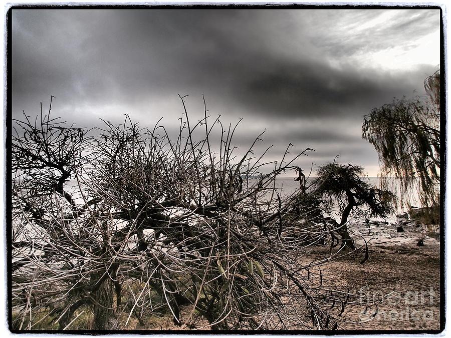 Colonia Del Sacramento Photograph - Wild Shore by Victoria Herrera