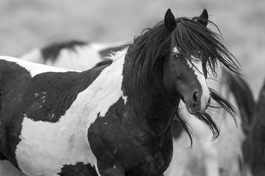 Wild Horse Photograph - Wild Spirit by Sandy Sisti
