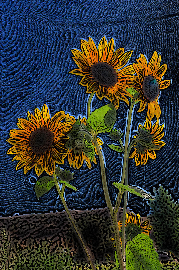 Wild Sunflowers Pencil Drawing Photograph by Scott Campbell