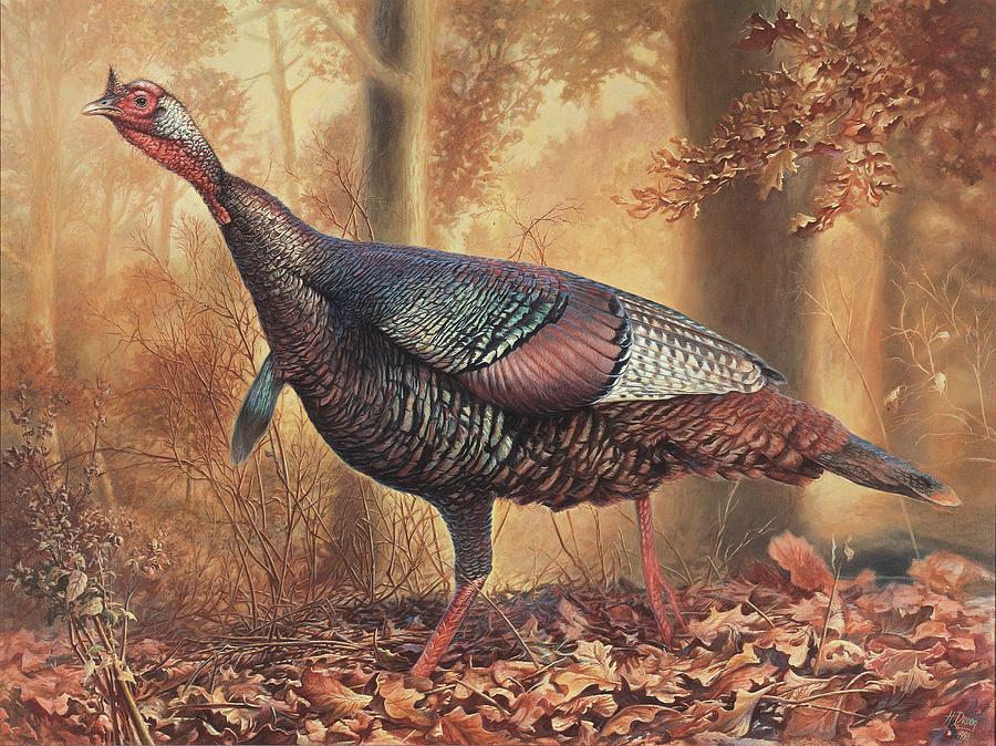 Wild Turkey Painting - Wild Turkey by Hans Droog