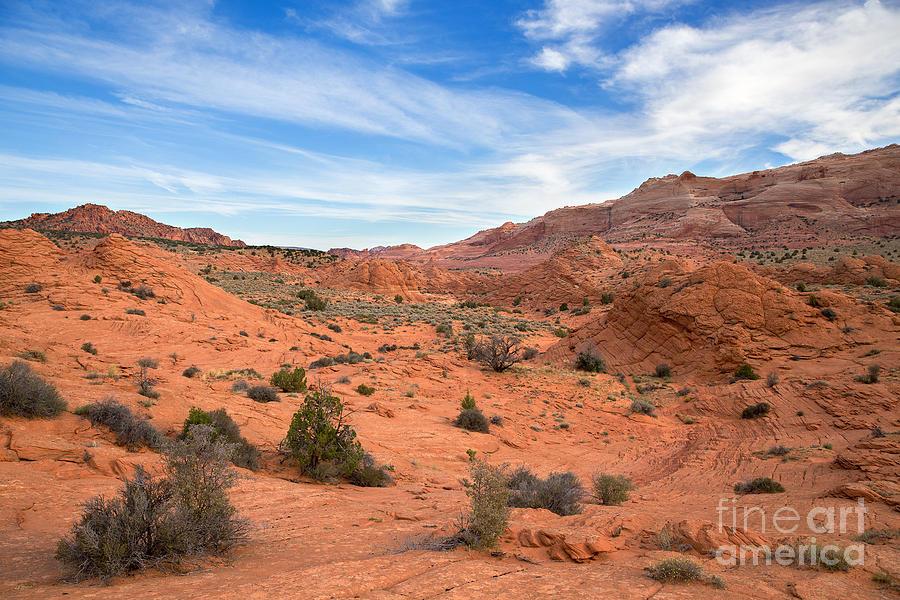 Wild West Photograph - Wild Wild West by Shishir Sathe